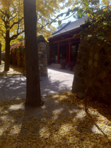 Autumn in the ruins of Yuanmingyuan