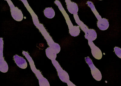 purple-drips-paths-invert